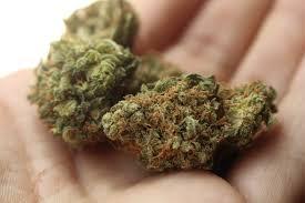Un guide pour les graines de cannabis autofloraison