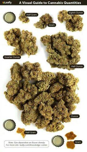 Ce qu'il faut savoir sur la culture du cannabis autofloraison