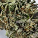 Tous les types de graines de cannabis