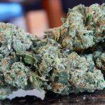 Tout savoir sur le cannabis Northern Lights