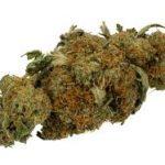 Les variétés de graines de cannabis